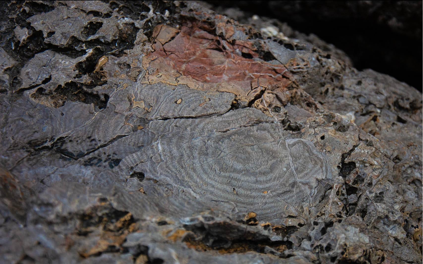 Когда дерево целует скалу