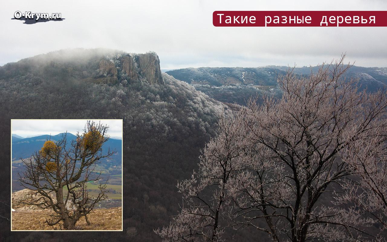 Такие разные деревья