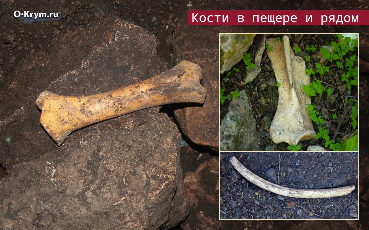 Кости на месте Святилища скотоводческого культа